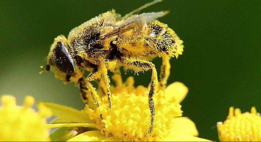 La Zona Maya revela lo que pasa con las abejas, están desapareciendo